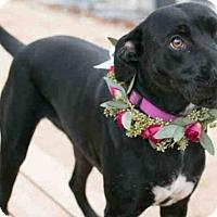 Adopt A Pet :: MILLIE - Tulsa, OK