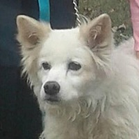 Adopt A Pet :: Sheba of Cincinnati, Ohio - Lindsey, OH