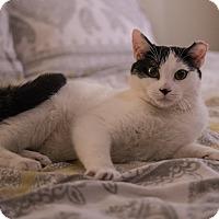 Adopt A Pet :: Adina and Elvis - Staten Island, NY