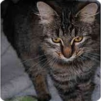 Adopt A Pet :: O'Keefe - Marietta, GA