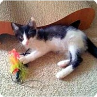 Adopt A Pet :: Ferguson - Alexandria, VA