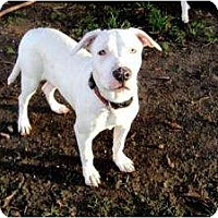 Adopt A Pet :: Zoey - North Hollywood, CA