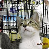 Adopt A Pet :: Jackson - Riverside, RI