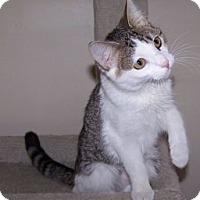 Adopt A Pet :: K-Hart11-Allison - Colorado Springs, CO