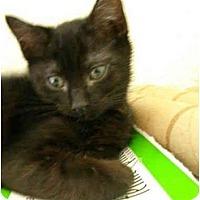 Adopt A Pet :: Molena - Davis, CA