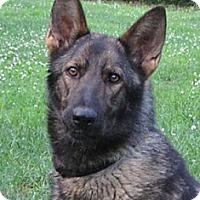 Adopt A Pet :: Kiley - Nashville, TN