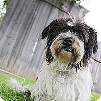 Adopt A Pet :: Bagwell - survivor! - Norwalk, CT