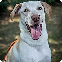 Adopt A Pet :: Charlie - Cumming, GA