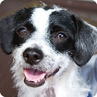 Adopt A Pet :: Frannie - Los Angeles, CA