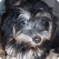 Adopt A Pet :: Percy - Algonquin, IL