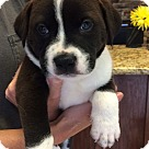 Adopt A Pet :: Bugsy