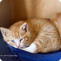 Adopt A Pet :: Caleb - Island Park, NY