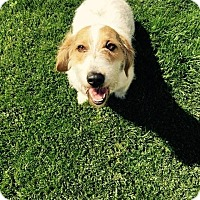Adopt A Pet :: Ella - San Francisco, CA