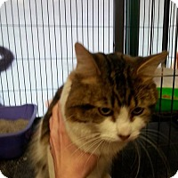 Adopt A Pet :: Topsy - Hamilton, ON