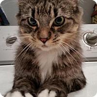 Adopt A Pet :: GA - Greta Belle (MCR) - Carrollton, GA