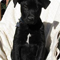 Adopt A Pet :: Jett - Oakland, AR