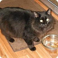 Adopt A Pet :: Majesty - McKenna, WA