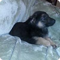 Adopt A Pet :: Duke - Holly Hill, SC