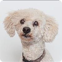 Adopt A Pet :: Ponce - San Luis Obispo, CA