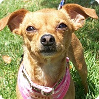 Adopt A Pet :: Daisy M - Castro Valley, CA