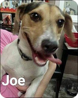 Beagle Mix Dog for adoption in Ottumwa, Iowa - Joe