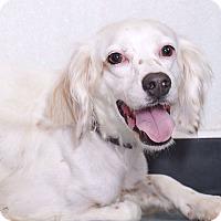 Adopt A Pet :: Crickett - Sudbury, MA