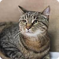 Adopt A Pet :: Cleopatra - $10! - Midland, MI