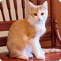 Adopt A Pet :: Colin - Morganton, NC