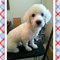 Adopt A Pet :: Adopted!!Frodo - S. TX - Tulsa, OK