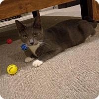 Adopt A Pet :: Cee Cee - Lancaster, PA