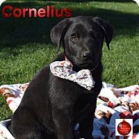 Adopt A Pet :: Cornelius - Washington, PA