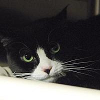 Adopt A Pet :: Bella - Woodland Park, NJ