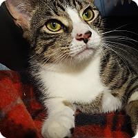 Adopt A Pet :: Caleb - Staten Island, NY