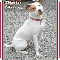 Adopt A Pet :: DIXIE - Linden, NJ