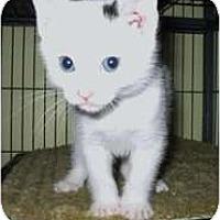 Adopt A Pet :: Bernie - Shelton, WA