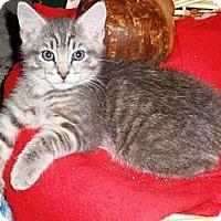 Adopt A Pet :: Donovan - Norwich, NY