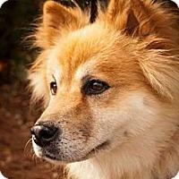 Adopt A Pet :: Frisco - Tucker, GA