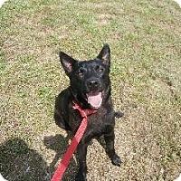 Adopt A Pet :: Lance - Batesville, AR