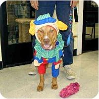 Adopt A Pet :: Nanette - Scottsdale, AZ