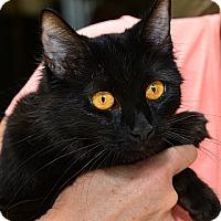 Adopt A Pet :: Sabrina - Davis, CA