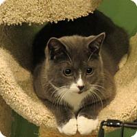 Adopt A Pet :: Cutie - Raritan, NJ