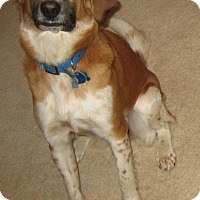 Adopt A Pet :: Libbie (courtesy listing) - Richmond, VA