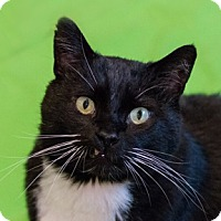Adopt A Pet :: Dublin - Calgary, AB