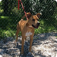 Cattle Dog Mix Dog for adoption in Atchison, Kansas - Ci Ci