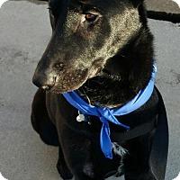 Adopt A Pet :: Cody - Grafton, WI