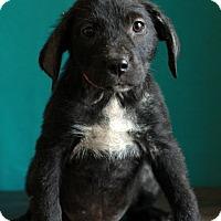Adopt A Pet :: Kelly - Waldorf, MD