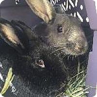 Adopt A Pet :: Storm - Woburn, MA