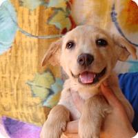 Adopt A Pet :: Pandy - Oviedo, FL