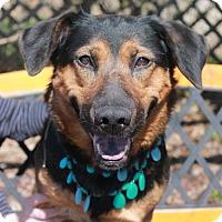 Adopt A Pet :: Mazie-PENDING - Garfield Heights, OH