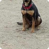 Adopt A Pet :: CHEYENNE - calimesa, CA